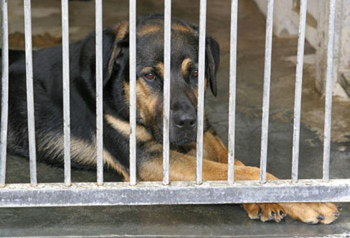 Buscan nueva ley para la proteccion de los animales