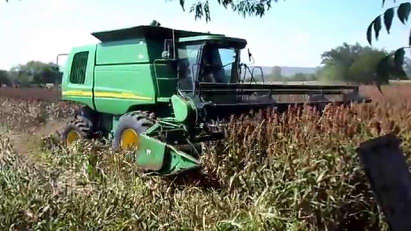 Productores de la zona norte trabajan en lo que será la cosecha del ciclo 2018