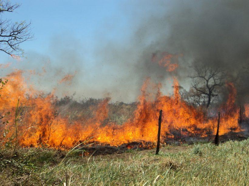 Realiza Conafor programa de capacitación para evitar incendios